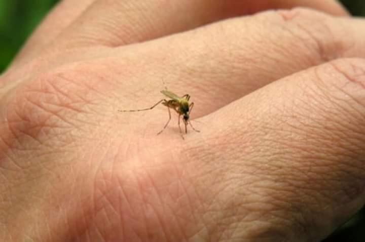 Charla informativa sobre prevención del dengue